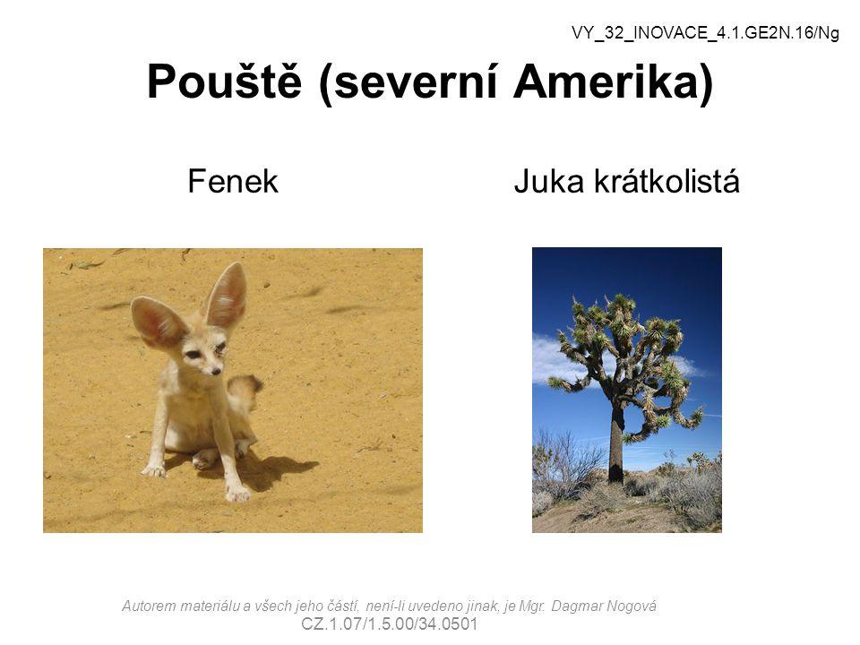 Pouště (severní Amerika) FenekJuka krátkolistá VY_32_INOVACE_4.1.GE2N.16/Ng Autorem materiálu a všech jeho částí, není-li uvedeno jinak, je Mgr.