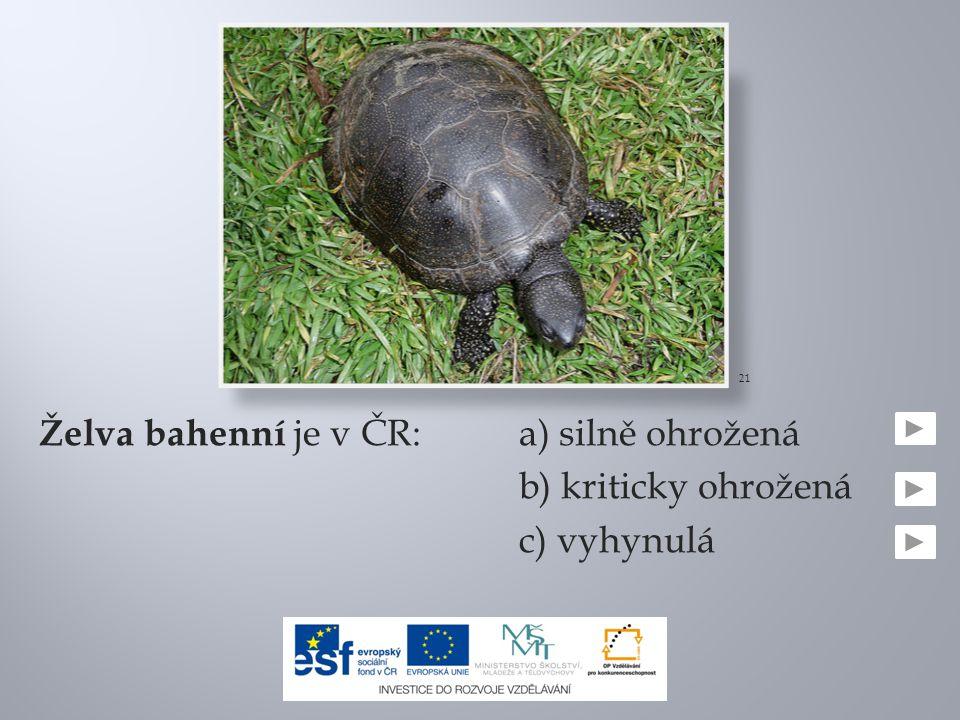 Želva bahenní je v ČR:a) silně ohrožená b) kriticky ohrožená c) vyhynulá 21