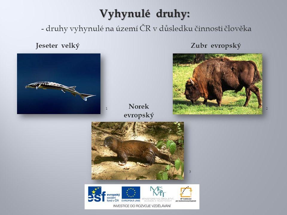 9.Emys orbicularis 2009 G1.jpg.In: Wikipedia: the free encyclopedia [online].