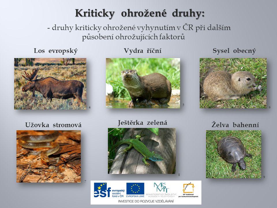 Los evropskýVydra říční Užovka stromová Kriticky ohrožené druhy: - druhy kriticky ohrožené vyhynutím v ČR při dalším působení ohrožujících faktorů Sys