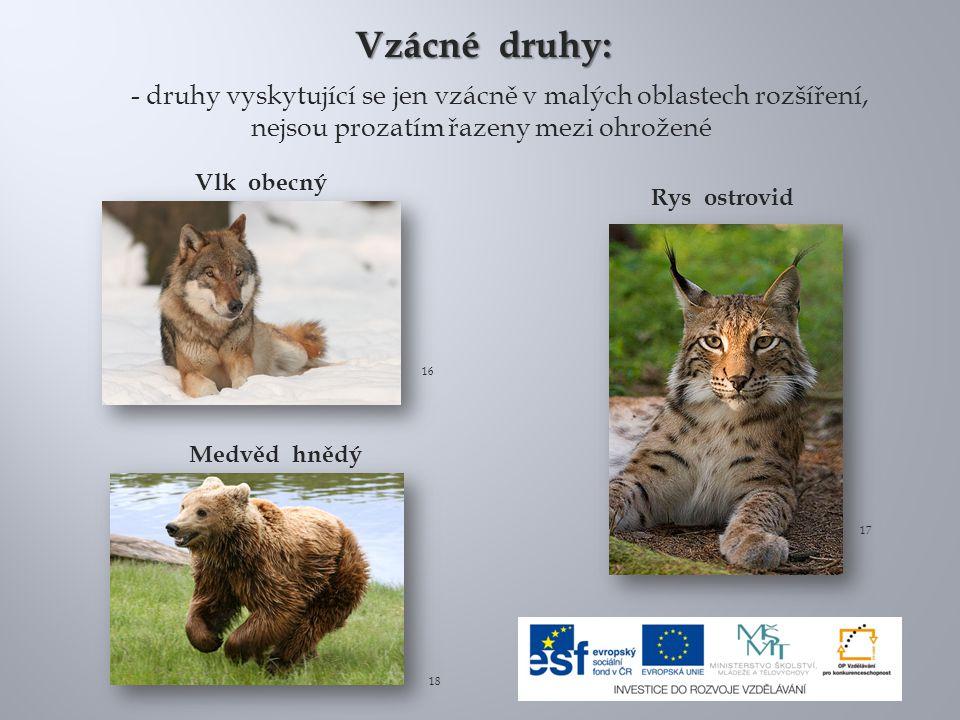 Vlk obecný Medvěd hnědý Rys ostrovid 16 17 18 Vzácné druhy: - druhy vyskytující se jen vzácně v malých oblastech rozšíření, nejsou prozatím řazeny mez