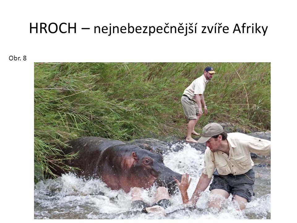 HROCH – nejnebezpečnější zvíře Afriky Obr. 8