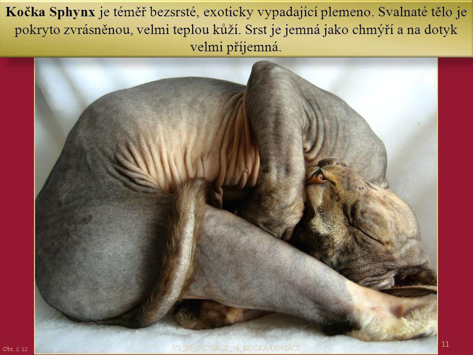 11 Kočka Sphynx je téměř bezsrsté, exoticky vypadající plemeno. Svalnaté tělo je pokryto zvrásněnou, velmi teplou kůží. Srst je jemná jako chmýří a na