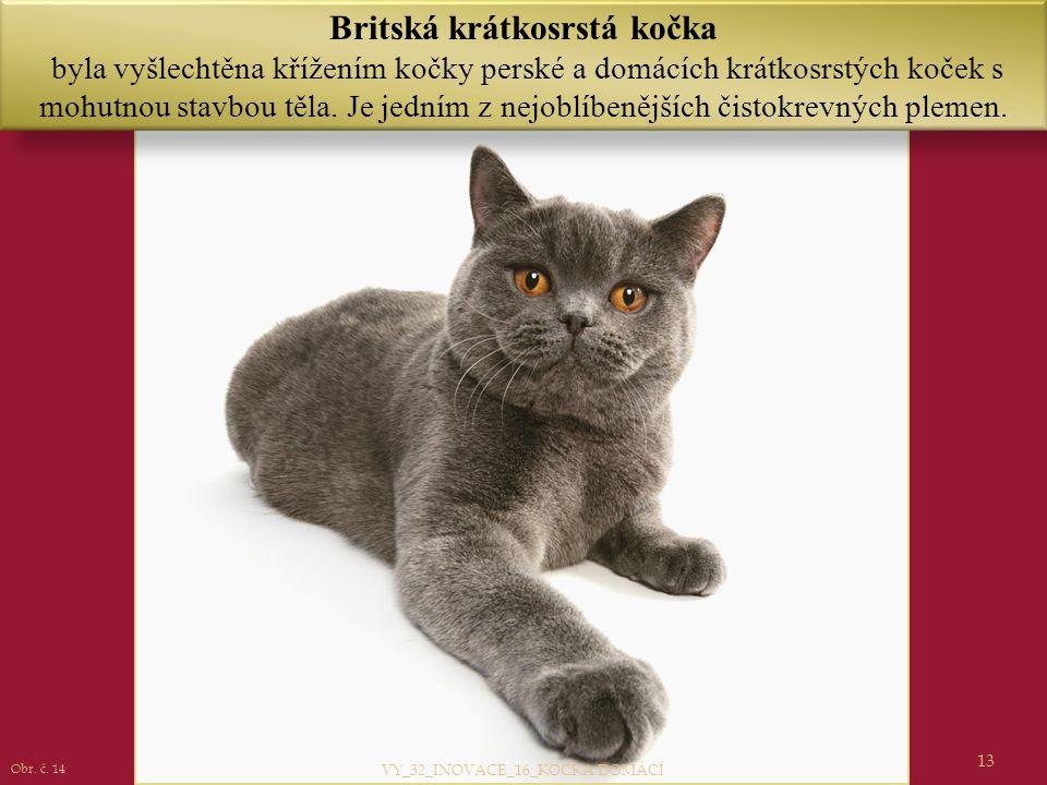 13 Britská krátkosrstá kočka byla vyšlechtěna křížením kočky perské a domácích krátkosrstých koček s mohutnou stavbou těla. Je jedním z nejoblíbenější