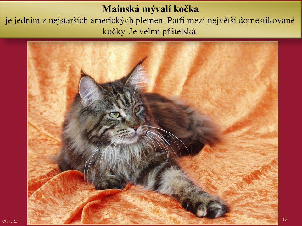 16 Mainská mývalí kočka je jedním z nejstarších amerických plemen. Patří mezi největší domestikované kočky. Je velmi přátelská. Obr. č. 17 VY_32_INOVA