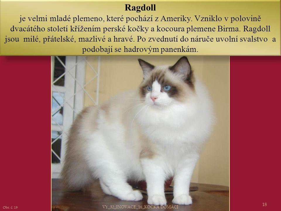Ragdoll je velmi mladé plemeno, které pochází z Ameriky. Vzniklo v polovině dvacátého století křížením perské kočky a kocoura plemene Birma. Ragdoll j