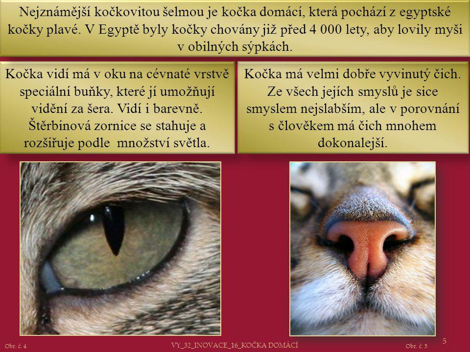 Kočka vidí má v oku na cévnaté vrstvě speciální buňky, které jí umožňují vidění za šera. Vidí i barevně. Štěrbinová zornice se stahuje a rozšiřuje pod