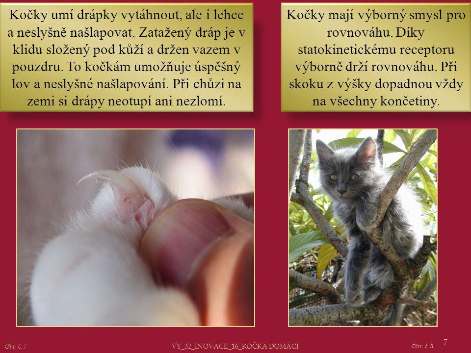 7 Kočky umí drápky vytáhnout, ale i lehce a neslyšně našlapovat. Zatažený dráp je v klidu složený pod kůží a držen vazem v pouzdru. To kočkám umožňuje
