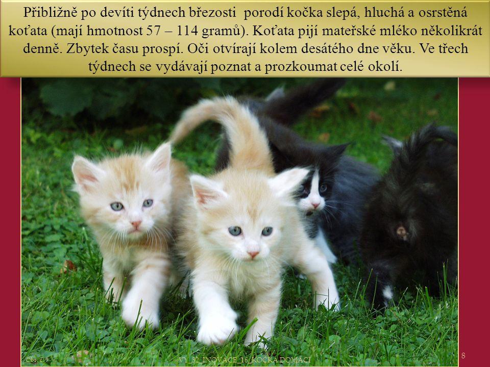 8 Obr. č. 9 Přibližně po devíti týdnech březosti porodí kočka slepá, hluchá a osrstěná koťata (mají hmotnost 57 – 114 gramů). Koťata pijí mateřské mlé
