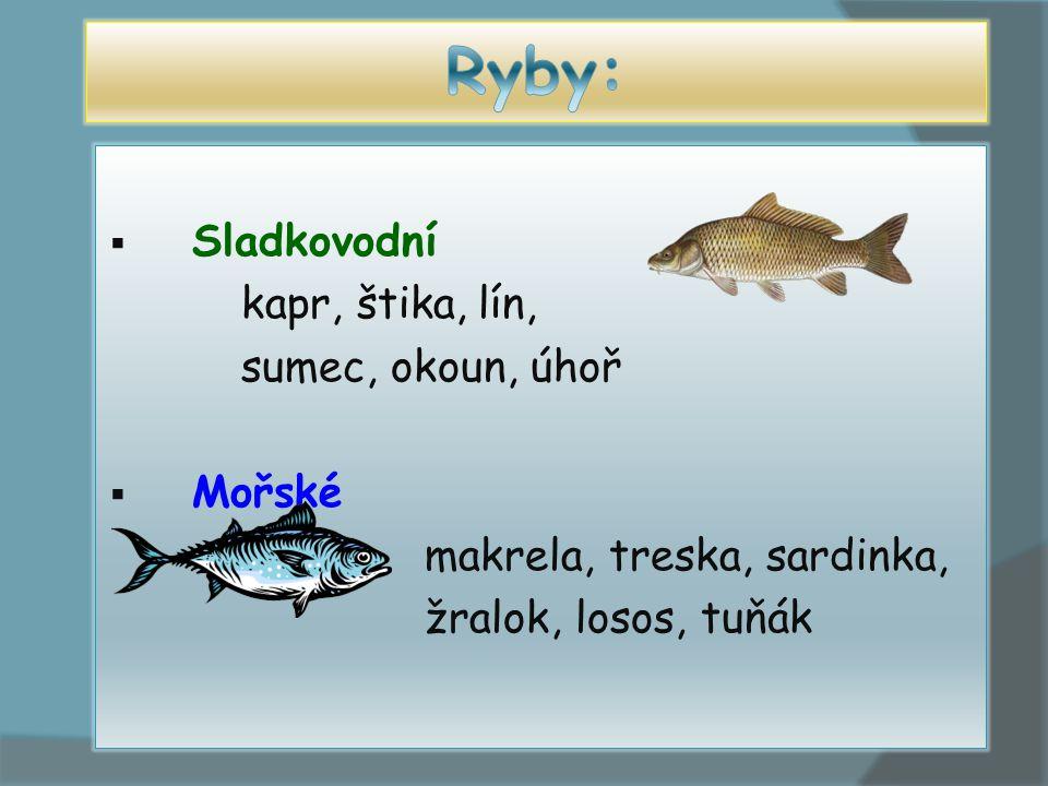  Sladkovodní kapr, štika, lín, sumec, okoun, úhoř  Mořské makrela, treska, sardinka, žralok, losos, tuňák