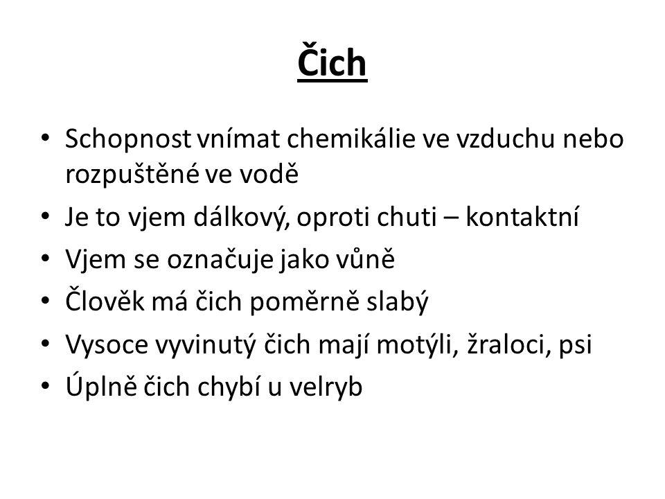 Uložení čichových buněk http://lidske-smysly.wbs.cz/cich/nos.jpg