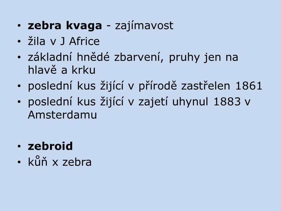 zebra kvaga - zajímavost žila v J Africe základní hnědé zbarvení, pruhy jen na hlavě a krku poslední kus žijící v přírodě zastřelen 1861 poslední kus