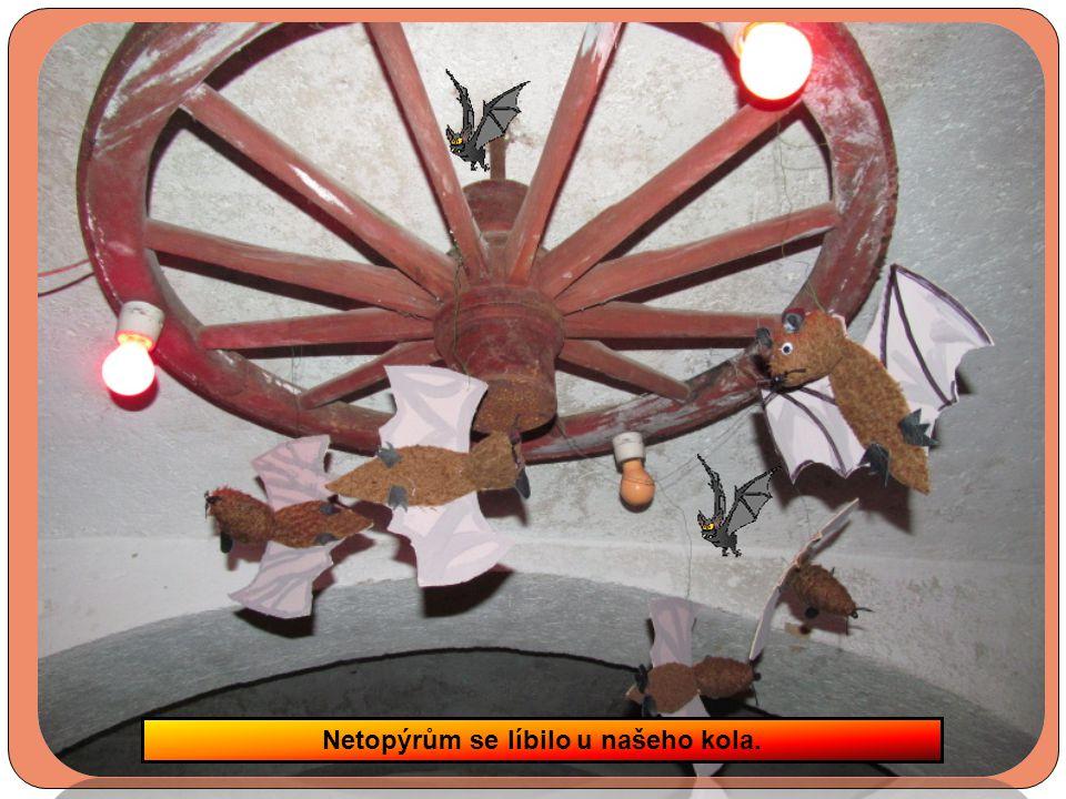 Na výstavě bylo 28 velkých dýní, 48 malých a spousta pavouků a netopýrů