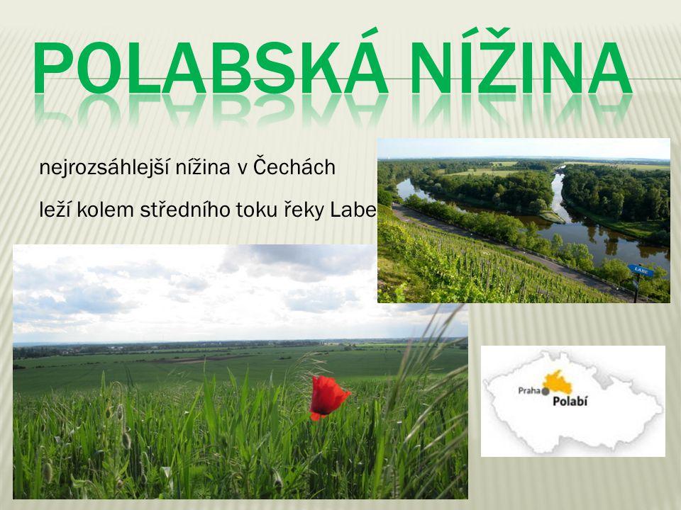 nejrozsáhlejší nížina v Čechách leží kolem středního toku řeky Labe
