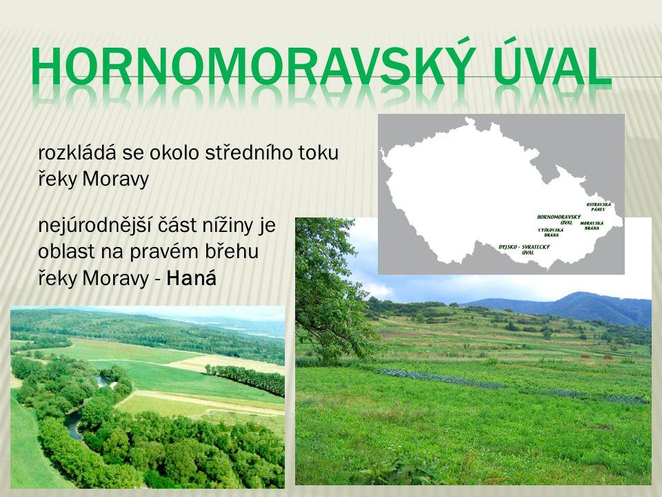 rozkládá se okolo středního toku řeky Moravy nejúrodnější část nížiny je oblast na pravém břehu řeky Moravy - Haná