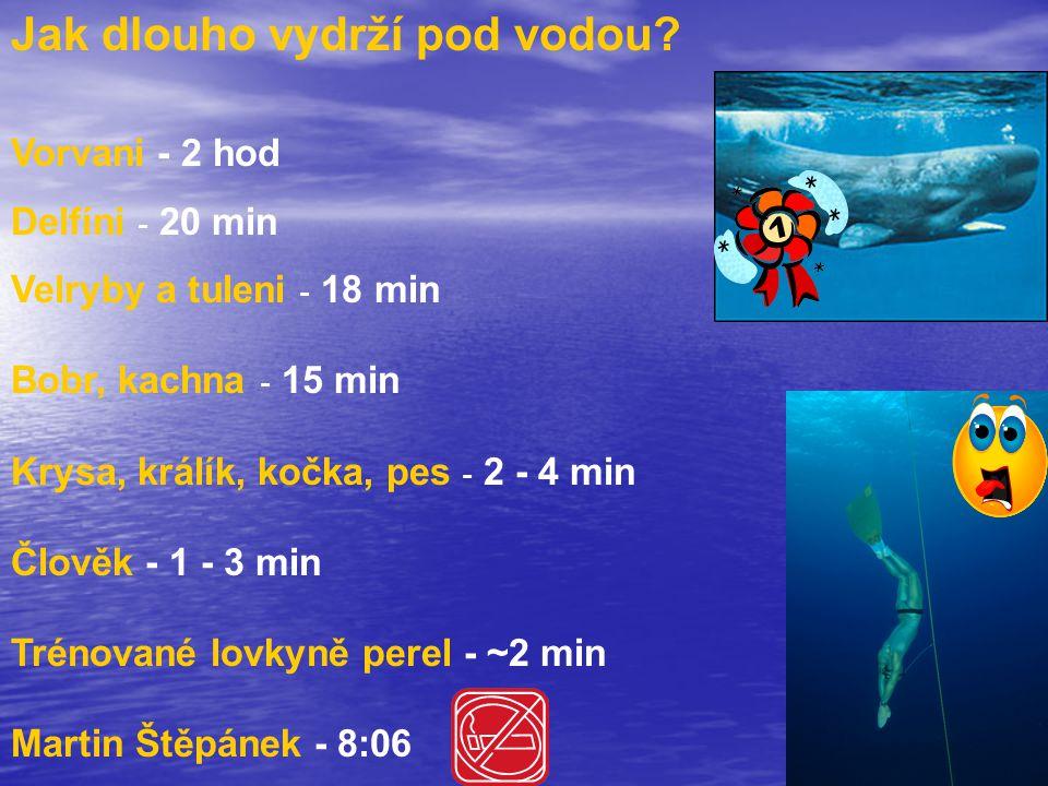 Jak dlouho vydrží pod vodou? Vorvani - 2 hod Delfíni - 20 min Velryby a tuleni - 18 min Bobr, kachna - 15 min Krysa, králík, kočka, pes - 2 - 4 min Čl