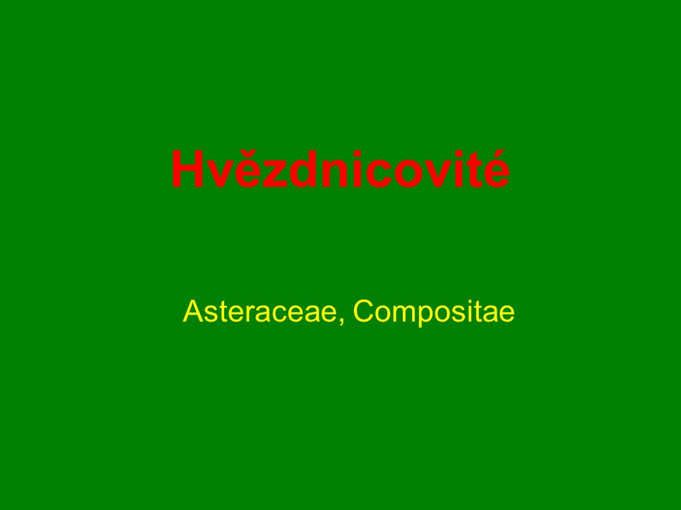 Hvězdnicovité Asteraceae, Compositae