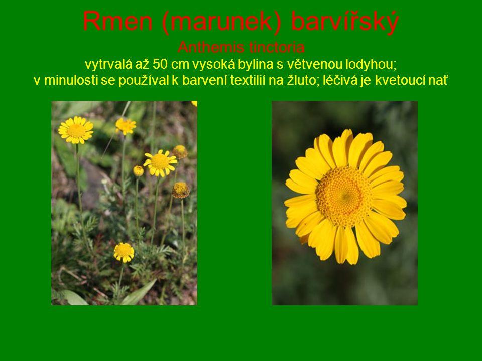 Rmen (marunek) barvířský Anthemis tinctoria vytrvalá až 50 cm vysoká bylina s větvenou lodyhou; v minulosti se používal k barvení textilií na žluto; l