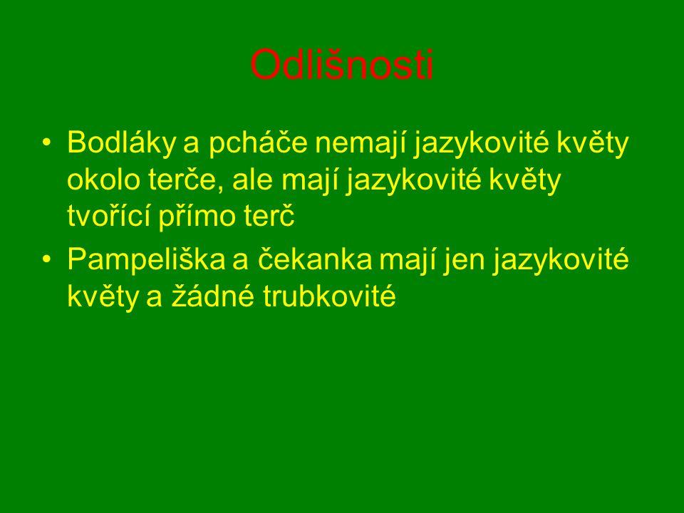Odlišnosti Bodláky a pcháče nemají jazykovité květy okolo terče, ale mají jazykovité květy tvořící přímo terč Pampeliška a čekanka mají jen jazykovité