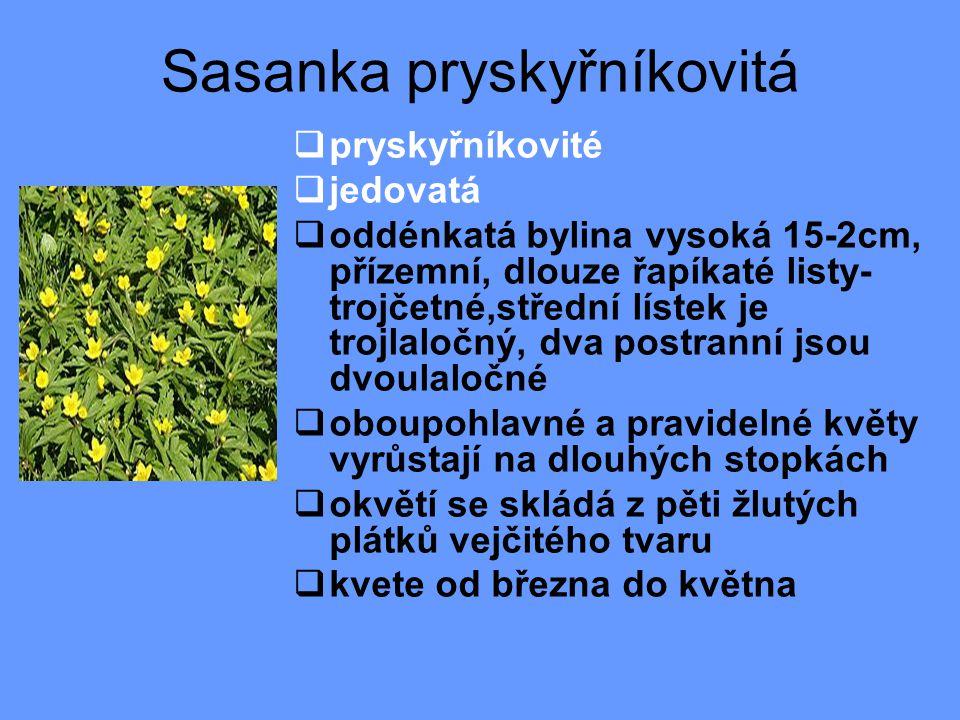 Sasanka pryskyřníkovitá  pryskyřníkovité  jedovatá  oddénkatá bylina vysoká 15-2cm, přízemní, dlouze řapíkaté listy- trojčetné,střední lístek je trojlaločný, dva postranní jsou dvoulaločné  oboupohlavné a pravidelné květy vyrůstají na dlouhých stopkách  okvětí se skládá z pěti žlutých plátků vejčitého tvaru  kvete od března do května