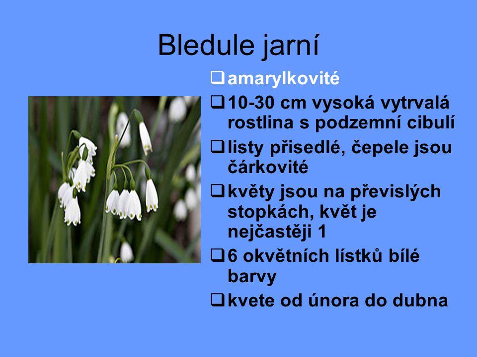 Bledule jarní  amarylkovité  10-30 cm vysoká vytrvalá rostlina s podzemní cibulí  listy přisedlé, čepele jsou čárkovité  květy jsou na převislých stopkách, květ je nejčastěji 1  6 okvětních lístků bílé barvy  kvete od února do dubna