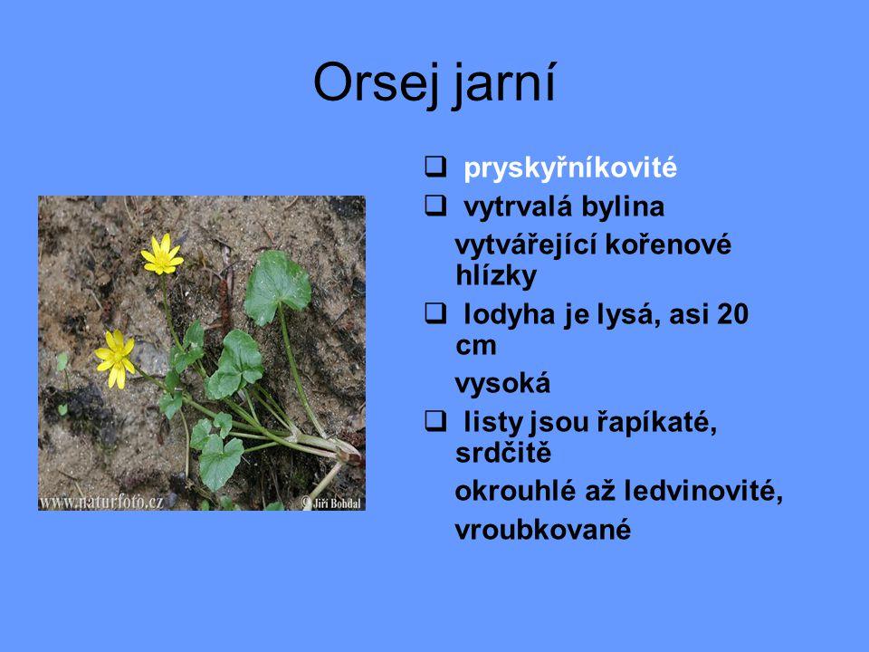 Orsej jarní  pryskyřníkovité  vytrvalá bylina vytvářející kořenové hlízky  lodyha je lysá, asi 20 cm vysoká  listy jsou řapíkaté, srdčitě okrouhlé až ledvinovité, vroubkované
