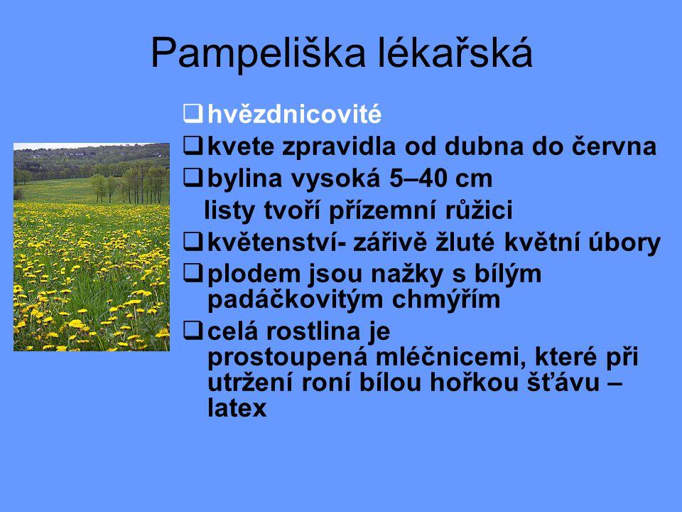 Pampeliška lékařská  hvězdnicovité  kvete zpravidla od dubna do června  bylina vysoká 5–40 cm listy tvoří přízemní růžici  květenství- zářivě žluté květní úbory  plodem jsou nažky s bílým padáčkovitým chmýřím  celá rostlina je prostoupená mléčnicemi, které při utržení roní bílou hořkou šťávu – latex
