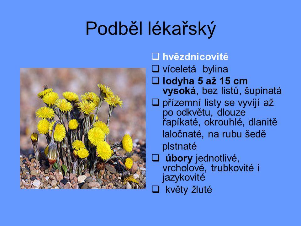 Podběl lékařský  hvězdnicovité  víceletá bylina  lodyha 5 až 15 cm vysoká, bez listů, šupinatá  přízemní listy se vyvíjí až po odkvětu, dlouze řapíkaté, okrouhlé, dlanitě laločnaté, na rubu šedě plstnaté  úbory jednotlivé, vrcholové, trubkovité i jazykovité  květy žluté