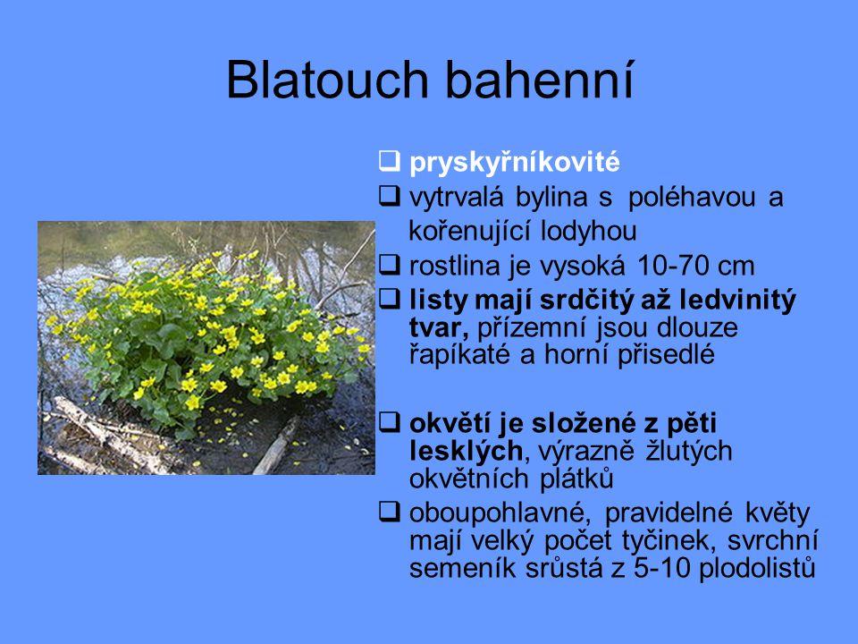 Blatouch bahenní  pryskyřníkovité  vytrvalá bylina s poléhavou a kořenující lodyhou  rostlina je vysoká 10-70 cm  listy mají srdčitý až ledvinitý tvar, přízemní jsou dlouze řapíkaté a horní přisedlé  okvětí je složené z pěti lesklých, výrazně žlutých okvětních plátků  oboupohlavné, pravidelné květy mají velký počet tyčinek, svrchní semeník srůstá z 5-10 plodolistů