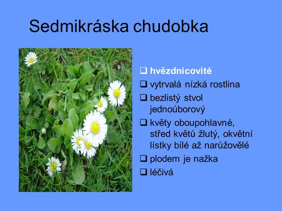 Prvosenka jarní  prvosenkovité  primula, petrklíč  drobná vytrvalá bylina  přízemní růžice listů  květy pětičetné v okolících nebo v hlávkách na stvolu  kalich zvonkovitý, koruna nálevkovitá