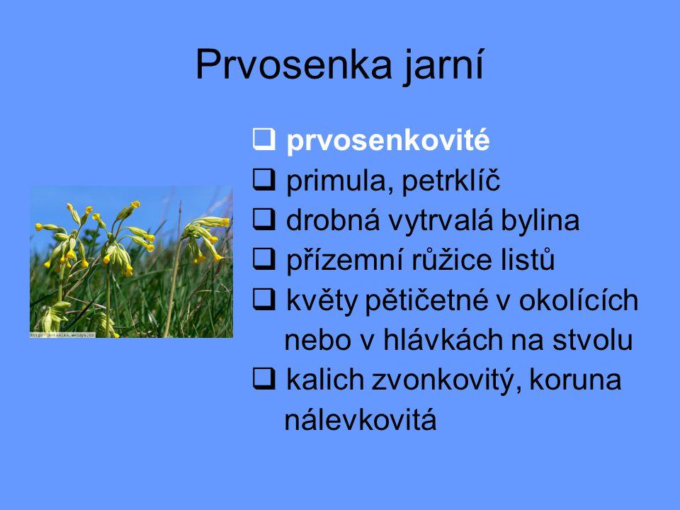 Autor: Mgr.Jana Závodná ZŠ J. J. Ryby v Rožmitále p.Tř.