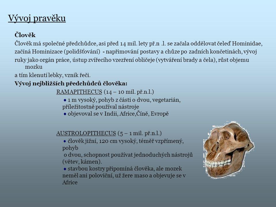 Vývoj pravěku Člověk Člověk má společné předchůdce, asi před 14 mil. lety př.n.l. se začala oddělovat čeleď Hominidae, začíná Hominizace (polidšťování