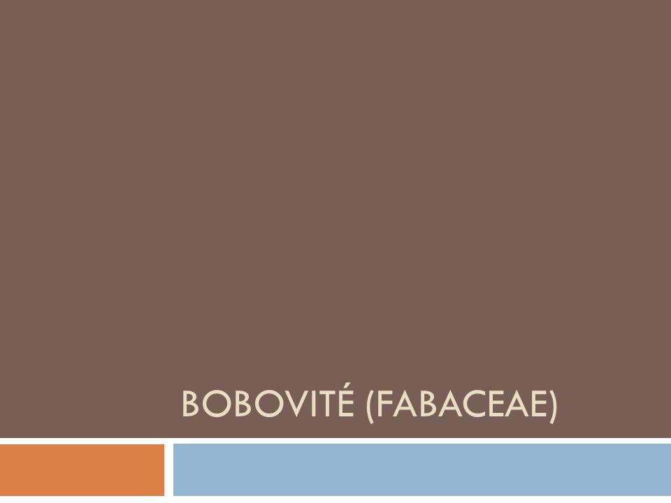 Základní charakteristika  Někdy také motýlokvěté (papilionaceae) či vikvovité (viciaceae)  Čeleď: dvouděložné  Řád: bobotvaré  730 rodů a 19 400 druhů  Globální rozšíření