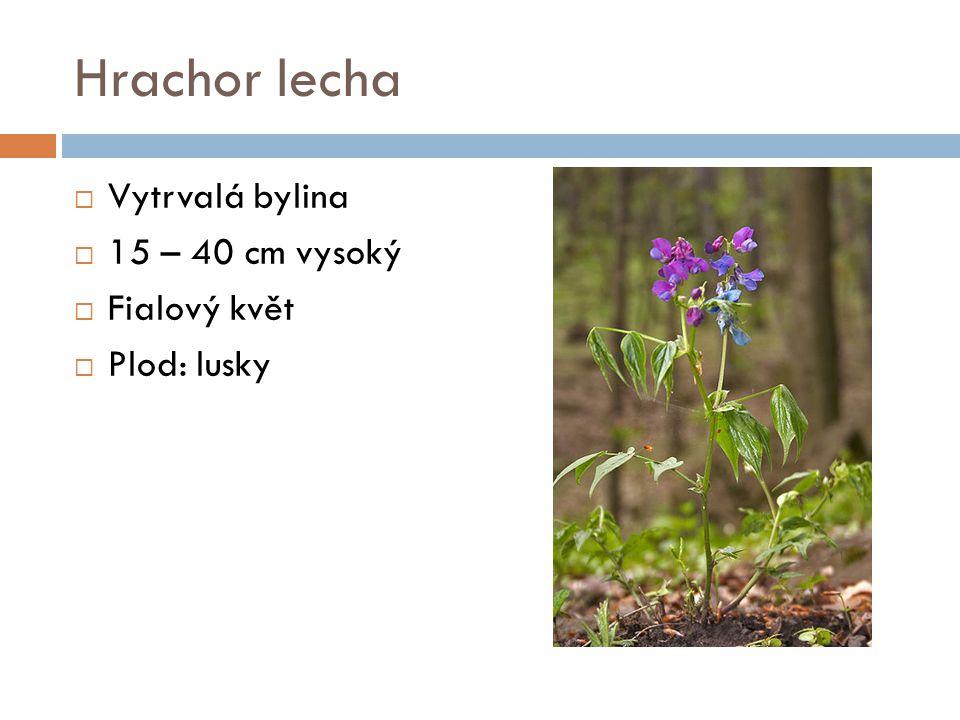 Hrachor lecha  Vytrvalá bylina  15 – 40 cm vysoký  Fialový květ  Plod: lusky