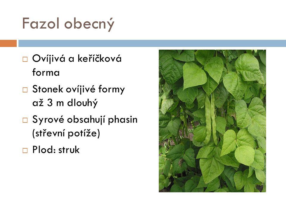 Čočka jedlá  Výška asi 40 cm  Třetí nejvyšší obsah bílkovin ze všech rostlin (26%)  Bělavě modré květy  Lusk obsahuje 2 semena