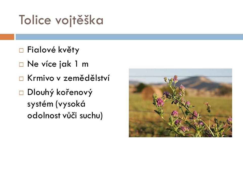 Trnovník akát  Opadavý strom (až 20 m) či keř  Rychle rostoucí  Bílé květy v hroznu  Akátový med