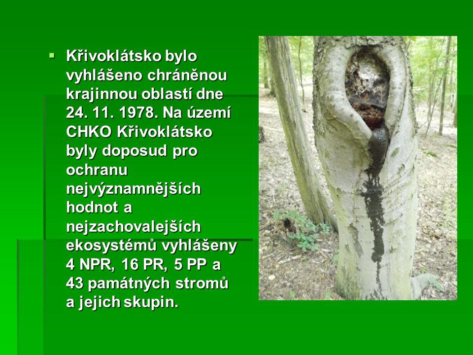 Příroda na Křivoklátsku  Žije tu např.Mlok skvrnitý, spousta vysoké zvěře, Liška obecná, atd.
