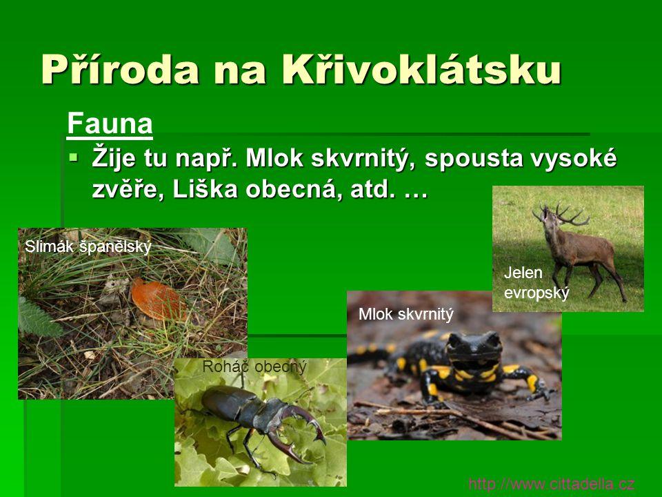 Příroda na Křivoklátsku  Žije tu např. Mlok skvrnitý, spousta vysoké zvěře, Liška obecná, atd. … Fauna http://www.cittadella.cz Mlok skvrnitý Jelen e
