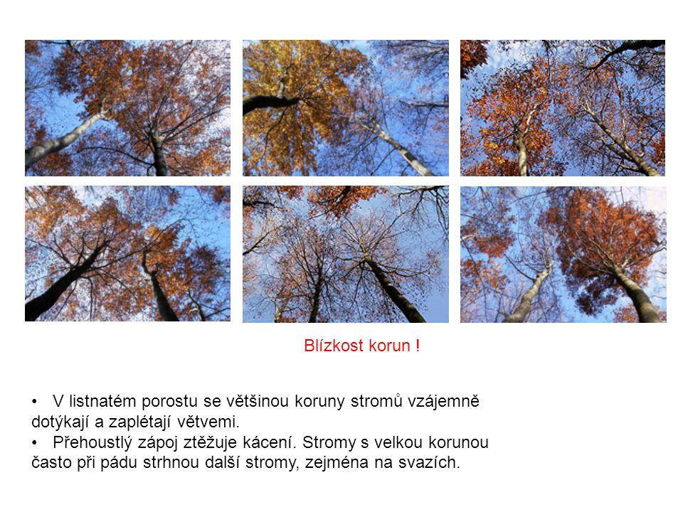 Blízkost korun ! V listnatém porostu se většinou koruny stromů vzájemně dotýkají a zaplétají větvemi. Přehoustlý zápoj ztěžuje kácení. Stromy s velkou