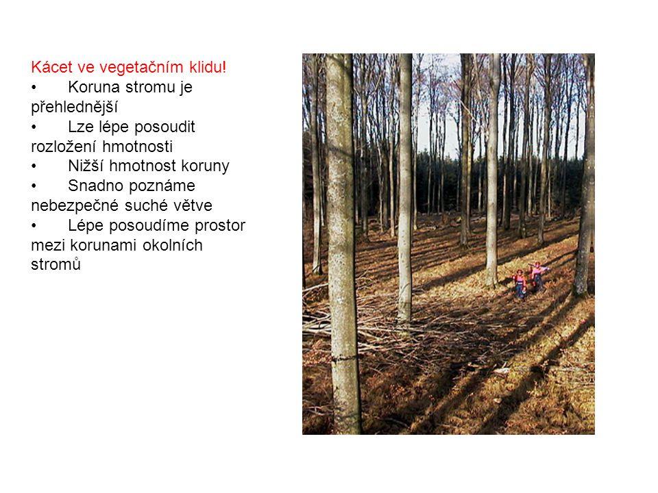 Kácet ve vegetačním klidu!  Koruna stromu je přehlednější  Lze lépe posoudit rozložení hmotnosti  Nižší hmotnost koruny  Snadno poznáme nebezpečné