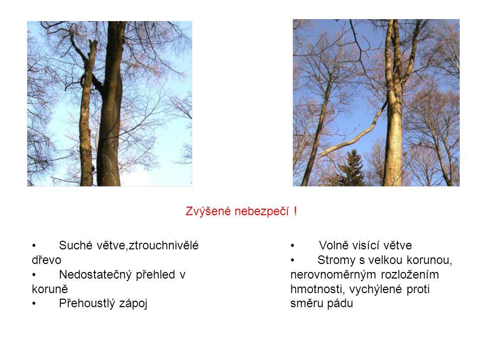  Suché větve,ztrouchnivělé dřevo  Nedostatečný přehled v koruně  Přehoustlý zápoj Volně visící větve  Stromy s velkou korunou, nerovnoměrným rozložením hmotnosti, vychýlené proti směru pádu Zvýšené nebezpečí !
