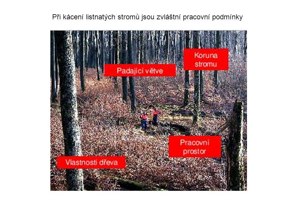 Při kácení listnatých stromů jsou zvláštní pracovní podmínky
