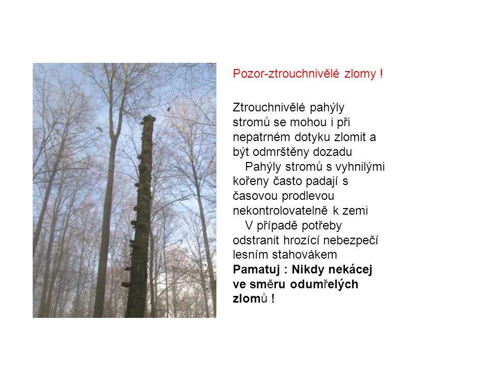 Ztrouchnivělé pahýly stromů se mohou i při nepatrném dotyku zlomit a být odmrštěny dozadu  Pahýly stromů s vyhnilými kořeny často padají s časovou prodlevou nekontrolovatelně k zemi  V případě potřeby odstranit hrozící nebezpečí lesním stahovákem Pamatuj : Nikdy nekácej ve směru odumřelých zlomů .