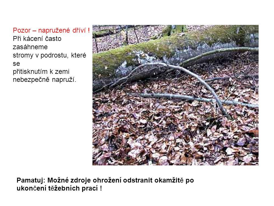 Pozor – napružené dříví ! Při kácení často zasáhneme stromy v podrostu, které se přitisknutím k zemi nebezpečně napruží. Pamatuj: Možné zdroje ohrožen