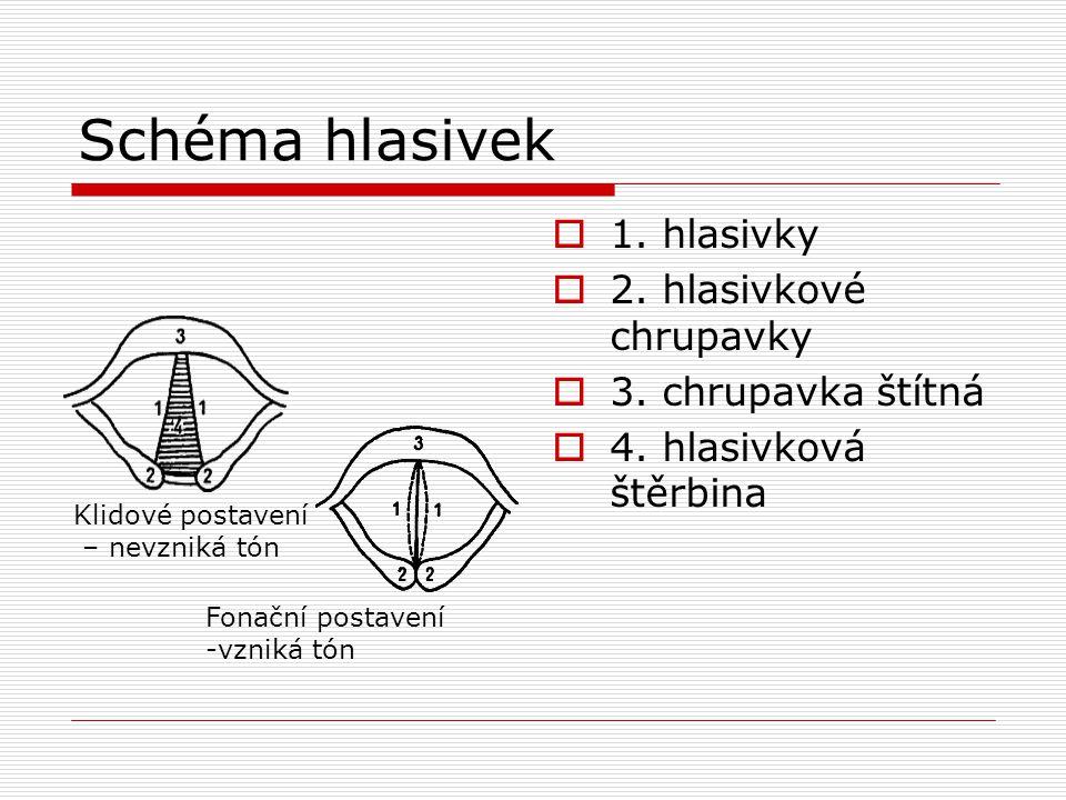 Schéma hlasivek  1. hlasivky  2. hlasivkové chrupavky  3. chrupavka štítná  4. hlasivková štěrbina Klidové postavení – nevzniká tón Fonační postav