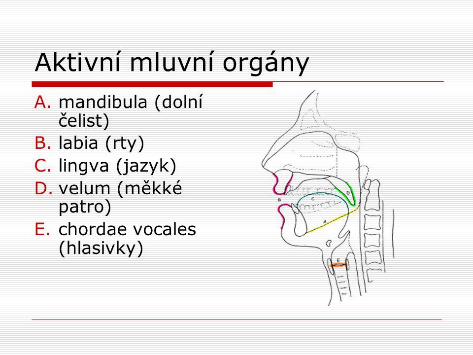 Aktivní mluvní orgány A.mandibula (dolní čelist) B.labia (rty) C.lingva (jazyk) D.velum (měkké patro) E.chordae vocales (hlasivky)