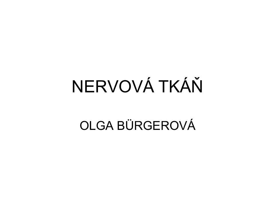 NERVOVÁ TKÁŇ OLGA BÜRGEROVÁ