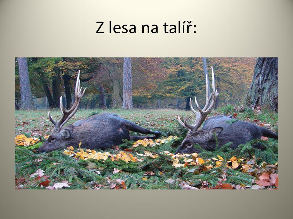 Z lesa na talíř: