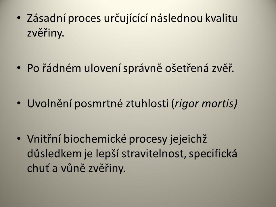 Zásadní proces určujícící následnou kvalitu zvěřiny. Po řádném ulovení správně ošetřená zvěř. Uvolnění posmrtné ztuhlosti (rigor mortis) Vnitřní bioch