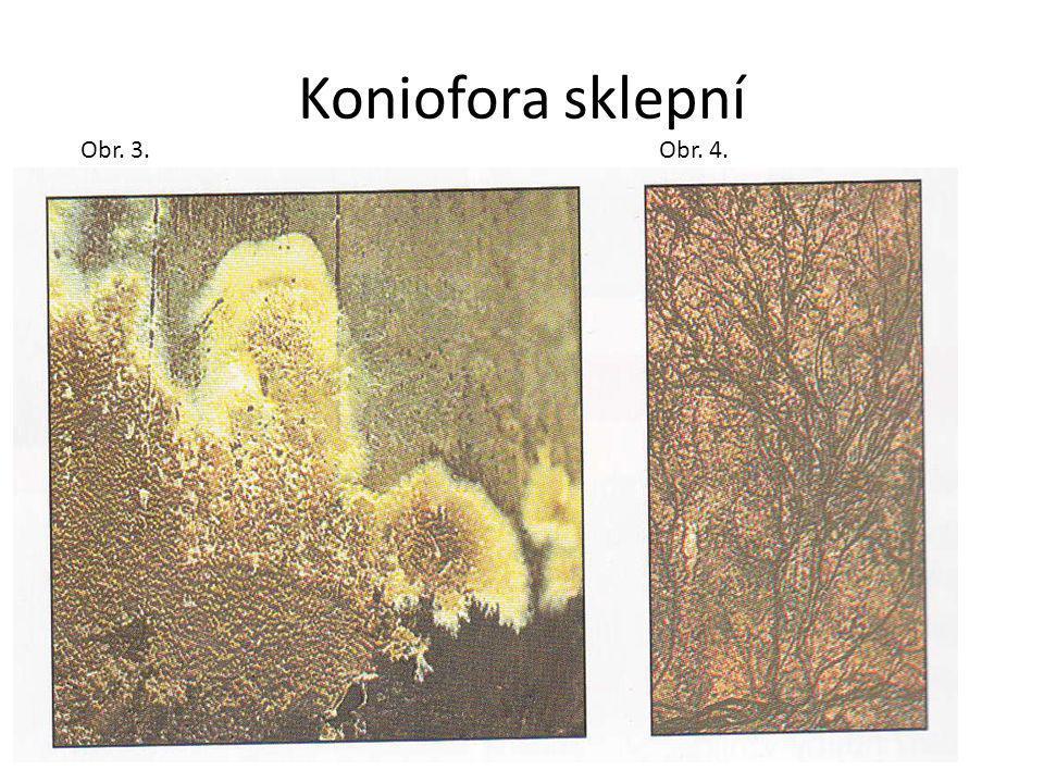 Koniofora sklepní Obr. 3. Obr. 4.